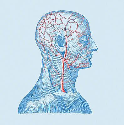 Head Veins Art Print by Mehau Kulyk