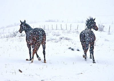 Horse Snow Photograph - Heading To The Hills by Betsy Knapp