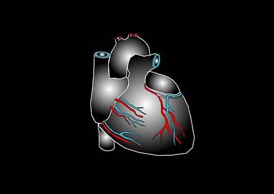 Pump Organ Photograph - Heart Anatomy, Artwork by Francis Leroy, Biocosmos