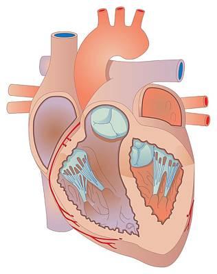 Heart, Artwork Art Print