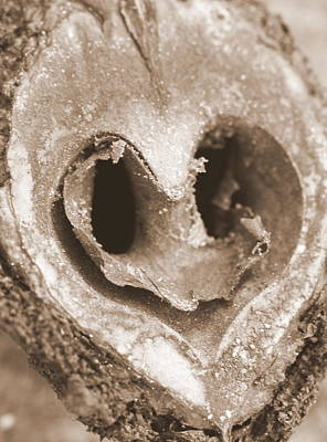 Photograph - Heart Center Of A Walnut Shell by Maureen  McDonald
