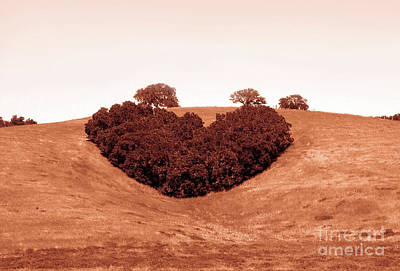 Central Coast Winery Photograph - Heart  by Michael Rock
