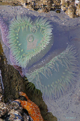 Art Print featuring the photograph Heart Of The Tide Pool by Mick Anderson