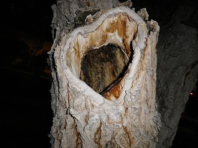 Photograph - Heart Of The Tree by Jonathan Barnes