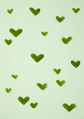 Y120831 Photograph - Heart-shaped Leaves (ecology Image) by sozaijiten/Datacraft