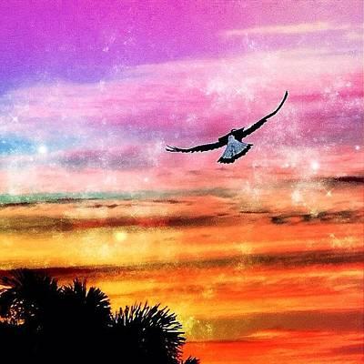 Birds Wall Art - Photograph - Heaven by Cameron Bentley