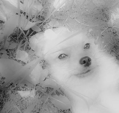 Greenworldalaska Photograph - Heavenly Pomeranian by Cory Green