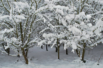 Heavy Snow Original by Terence Davis