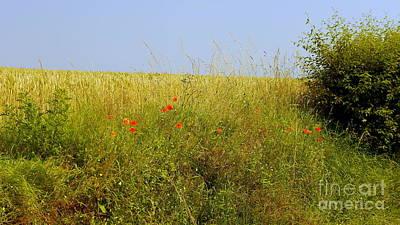 Hedgerow Flowers Original