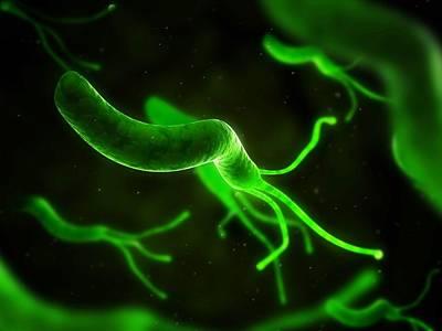 Campylobacter Pyloridis Photograph - Helicobacter Pylori Bacterium, Artwork by Sciepro