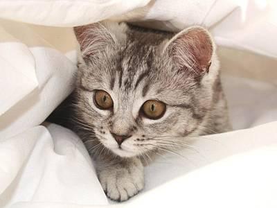 Hello Kitten Art Print by Claudia Moeckel