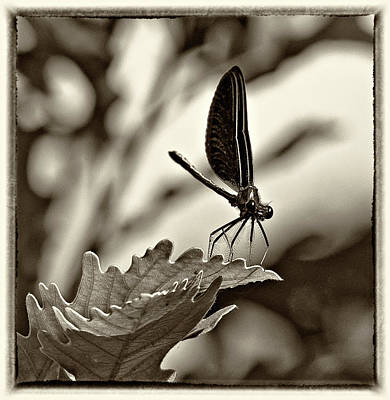 Metal Dragonfly Photograph - Hello Monochrome by Steve Harrington