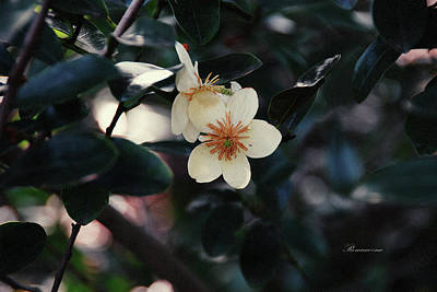 Floral Photograph - Hello Spring by Georgiana Romanovna