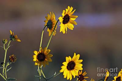 Photograph - Hello Sun by Shawn Naranjo