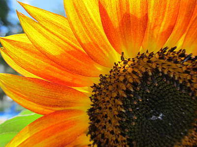 Art Print featuring the photograph Hello Sunflower by Tina M Wenger
