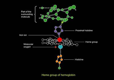 Heme Group In Haemoglobin, Diagram Art Print by Francis Leroy, Biocosmos