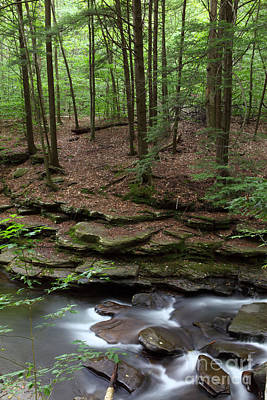 Photograph - Hemlock Forest Stone Ledge And Stream by John Stephens