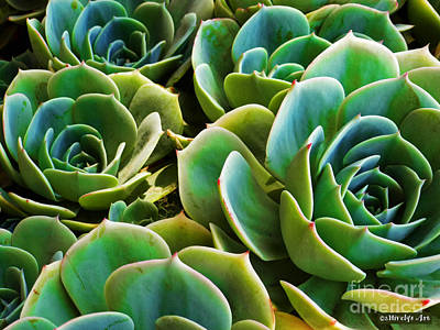 Photograph - Hens And Chicks by Methune Hively
