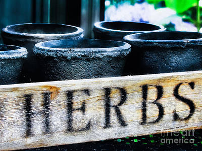 Herb Pots Print by Colleen Kammerer