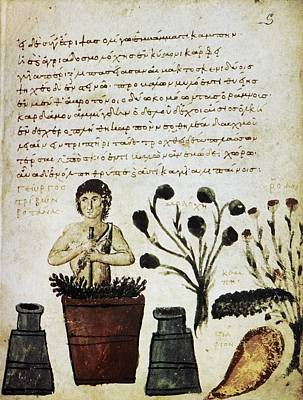 Byzantine Photograph - Herbal Medicine, 10th Century by