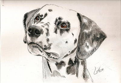 Dalmation Drawing - Hercie by Janet Lavida