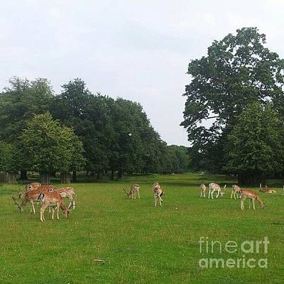 Wildlife Photograph - Herd by YoursByShores Isabella Shores