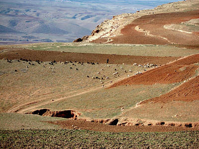 Moroccan Photograph - Herd In The Atlas Mountains by Miki De Goodaboom