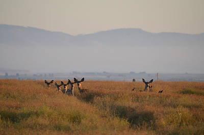 Mule Deer Herd Photograph - Herd Of Deer by Linda Larson