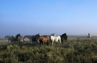 Herd Of Horses And Cowboy On Horseback Art Print by Natural Selection Craig Tuttle