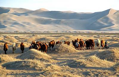 Photograph - Herding Camels by Diane Height