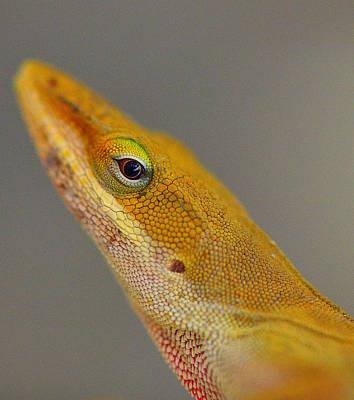 Art Print featuring the photograph Here Lizard Lizard by Tanya Tanski