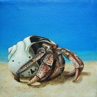 Painting - Hermit Crab by Cindy D Chinn