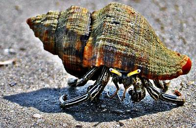 Photograph - Hermit Crab by John Collins