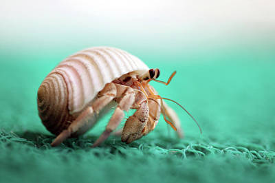 Hermit Crab Running Art Print by With love of photography
