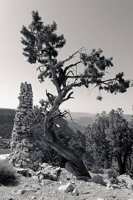 Photograph - Hermit's Rest Tree And Chimney by Julie Niemela