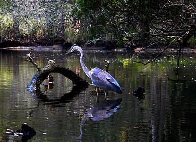 Heron And Root Art Print by Christy Usilton