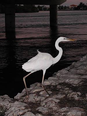Photograph - Heron At Night by Nancy Taylor