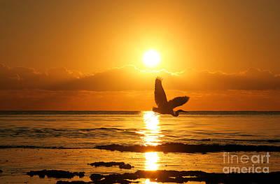 Heron At Sunrise Art Print by Matt Tilghman