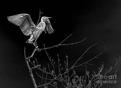 Heron In Contrast Original by Sue Stefanowicz