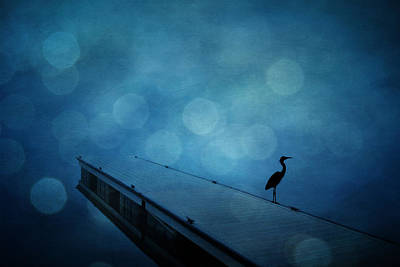 Photograph - Heron Morning by Emily Stauring
