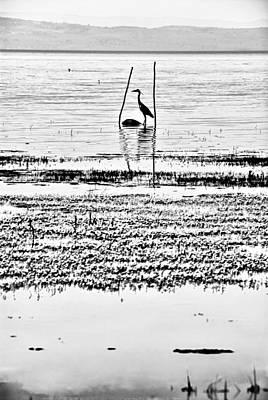 Heron Art Print by Okan YILMAZ