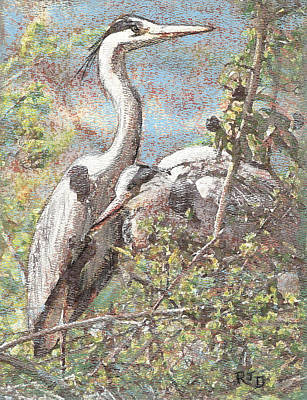Herons Resting Art Print by Richard James Digance
