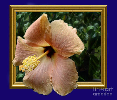 Photograph - Hibiscus Beauty 3d by Donna Brown