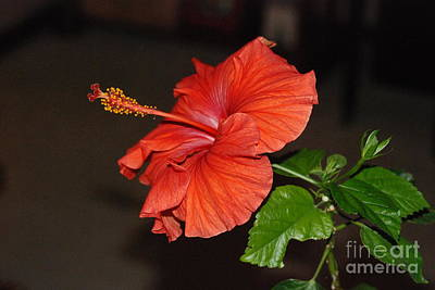 Art Print featuring the photograph Hibiscus Bloom by Mark McReynolds