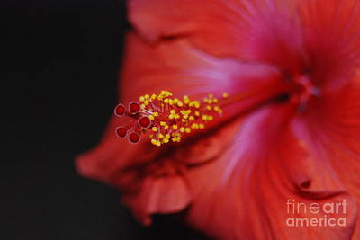Art Print featuring the photograph Hibiscus Extreme by Mark McReynolds