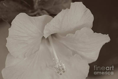 Photograph - Hibiscus Flower In B And W by Donna Bentley
