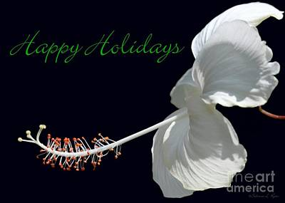 Photograph - Hibiscus Holiday Card by Sabrina L Ryan