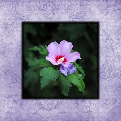 Photograph - Hibiscus I Photo Square by Jai Johnson