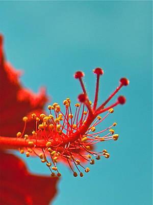 Photograph - Hibiscus by Jocelyn Kahawai