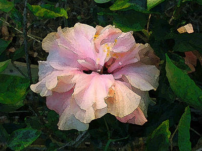 Photograph - Hibiscus Radiant by Katharine Birkett